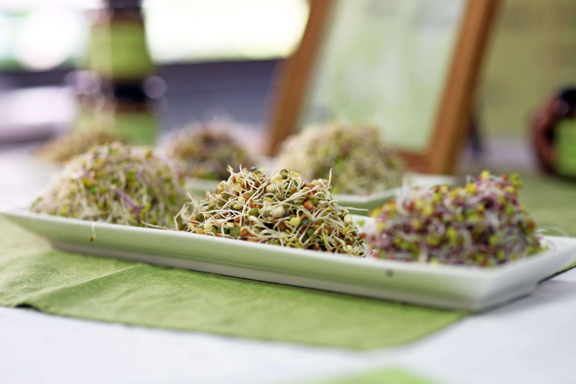 sempreverde-biogermogli-tavola