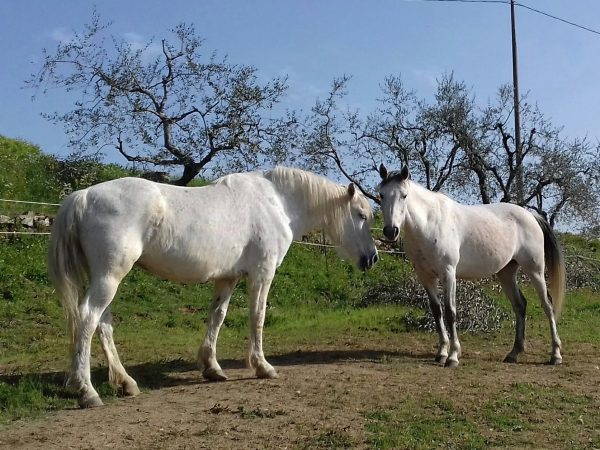 selva-cavalli