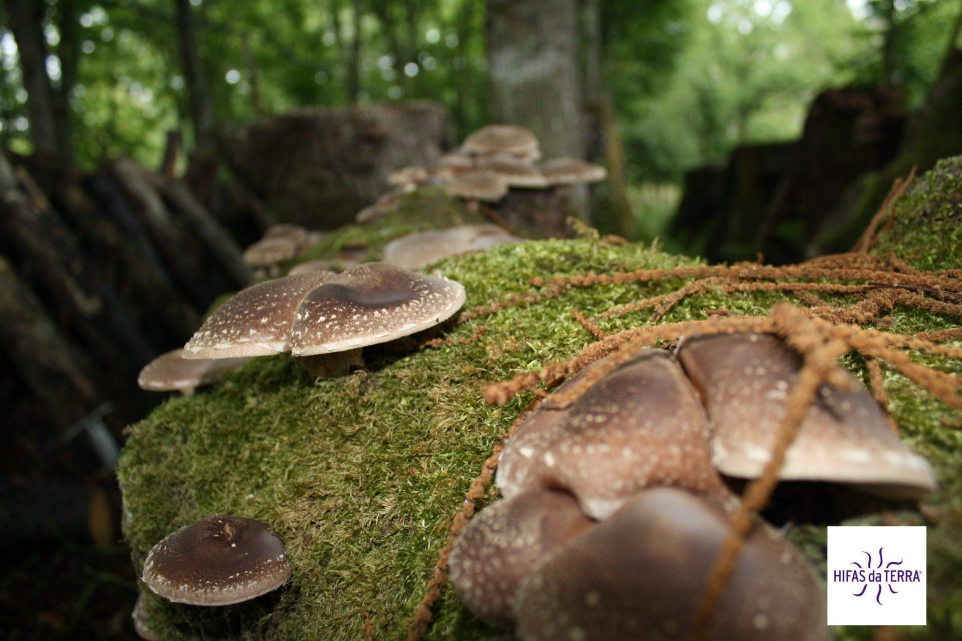freeland-funghi